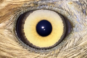 Texas Veterinary Ophthalmology